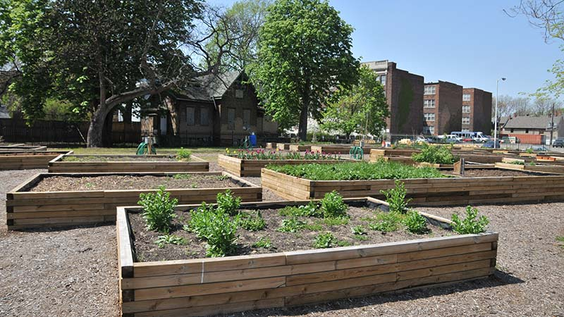 A community garden overview